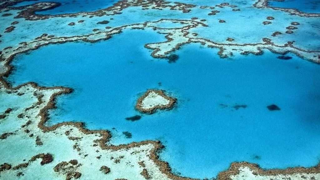 Un arrecife de coral es una formación acuática compuesta por esqueletos de coral