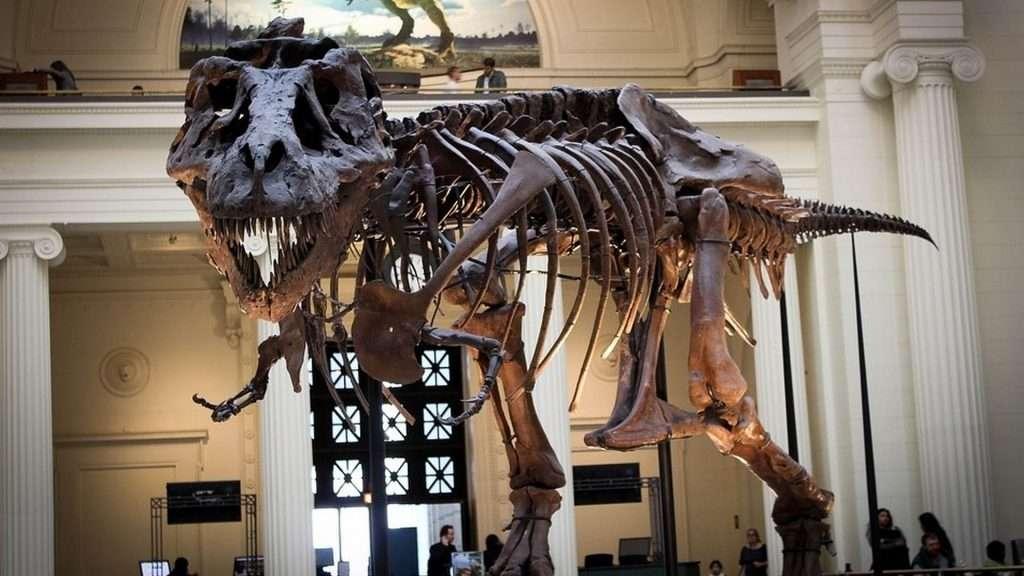 un Tyrannosaurus Rex podía medir alrededor de 13 metros de longitud y alcanzar las 8 toneladas de peso